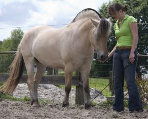 paardentandarts Ines Laurent